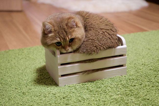 Chú mèo đi hia béo ục ịch khiến bạn muốn ẵm ngay về nuôi - Ảnh 4.