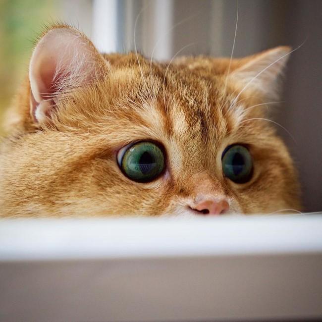 Chú mèo đi hia béo ục ịch khiến bạn muốn ẵm ngay về nuôi - Ảnh 6.
