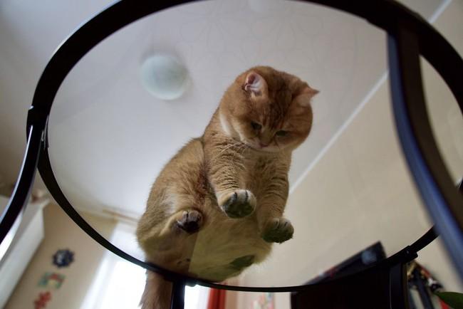 Chú mèo đi hia béo ục ịch khiến bạn muốn ẵm ngay về nuôi - Ảnh 8.