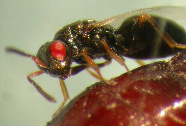 Tin được không: Khoa học tạo ra những con ong đến từ địa ngục và bước chuyển mình quan trọng của công nghệ gene - Ảnh 3.