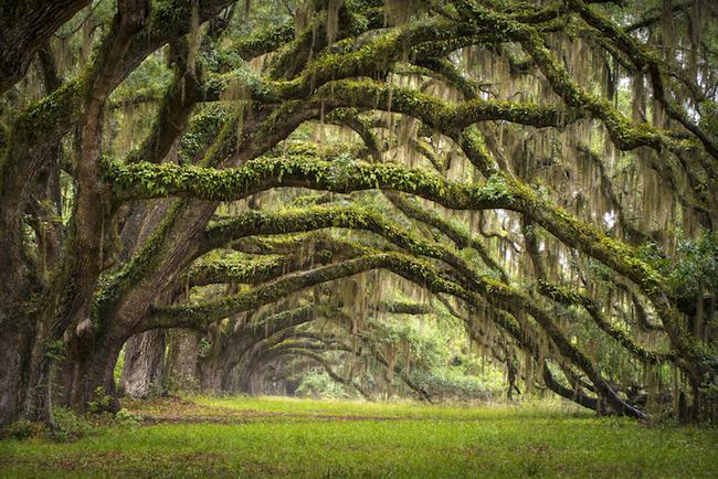 Ngắm nhìn 10 con đường tự nhiên đẹp nhất thế giới - Ảnh 9.