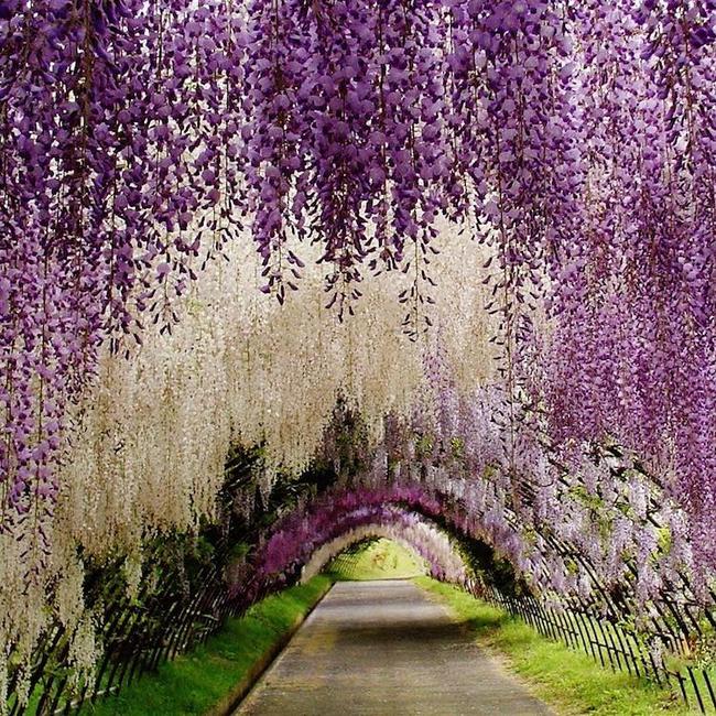 Ngắm nhìn 10 con đường tự nhiên đẹp nhất thế giới - Ảnh 19.