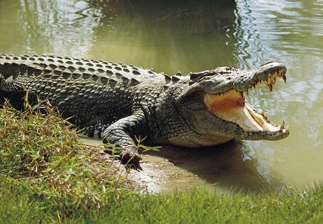 9X nhảy xuống sông đầy cá sấu để được hẹn hò với đàn chị - Ảnh 3.