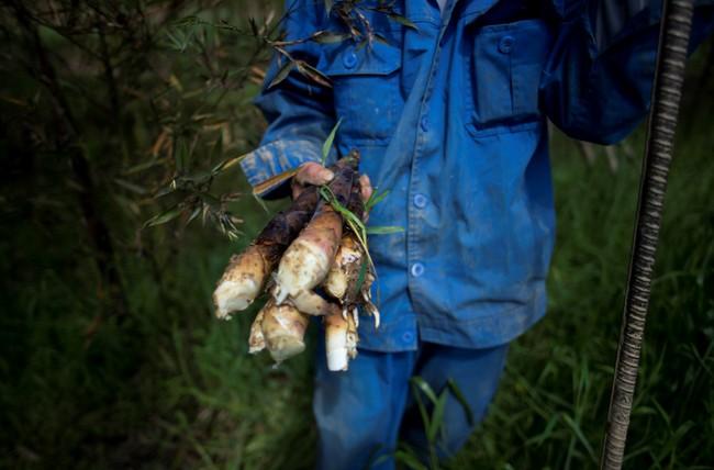 Rộn ràng mùa thu hoạch măng tươi ở Chiết Giang - Ảnh 3.