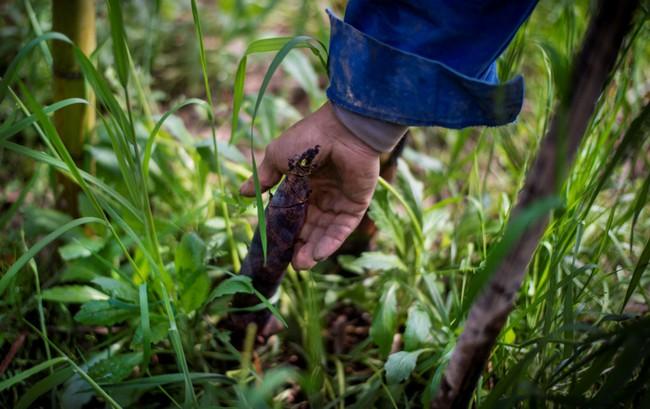 Rộn ràng mùa thu hoạch măng tươi ở Chiết Giang - Ảnh 4.