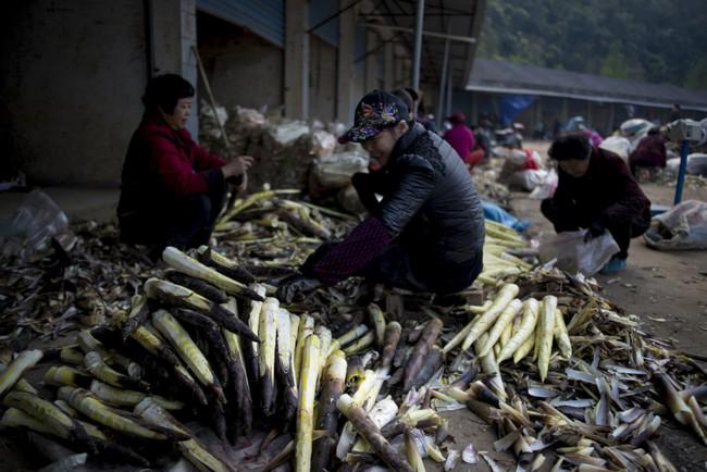 Rộn ràng mùa thu hoạch măng tươi ở Chiết Giang - Ảnh 5.