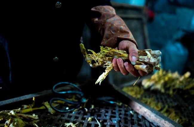 Rộn ràng mùa thu hoạch măng tươi ở Chiết Giang - Ảnh 6.