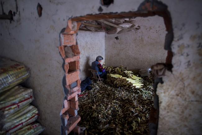 Rộn ràng mùa thu hoạch măng tươi ở Chiết Giang - Ảnh 8.