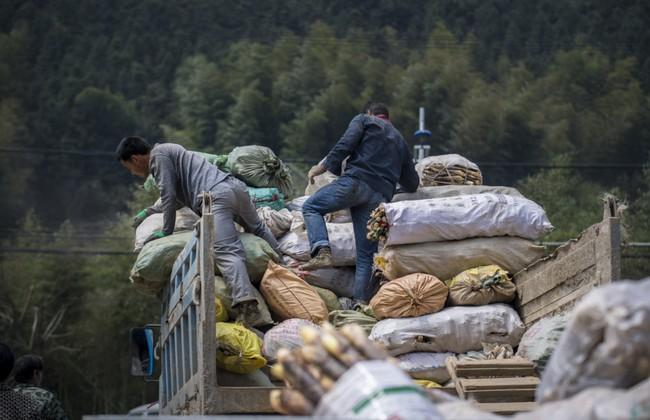 Rộn ràng mùa thu hoạch măng tươi ở Chiết Giang - Ảnh 10.
