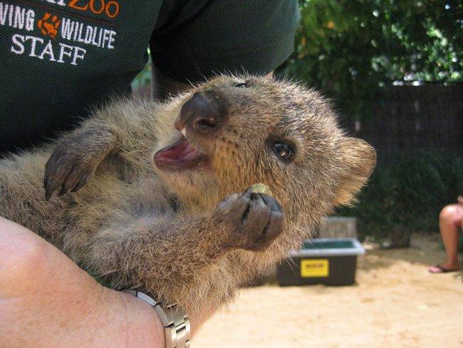 Chỉ ước mình được như loài chuột túi mini hạnh phúc và vui vẻ nhất thế gian - Ảnh 23.