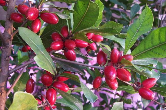 Chua cay mặn đắng đều trở thành ngọt ngào nếu ăn được quả thần mà Việt Nam đang có - Ảnh 4.
