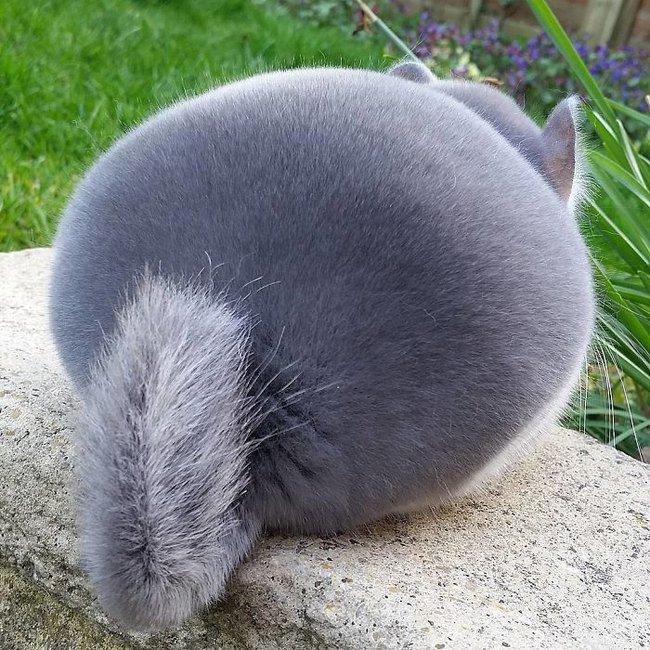 Phát hiện loài sóc đáng yêu có cặp mông căng tròn như đồ giả - Ảnh 6.