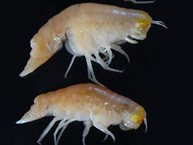 Sinh vật tại vùng biển sâu nhất hành tinh cũng bắt đầu bị ảnh hưởng bởi con người - Ảnh 1.