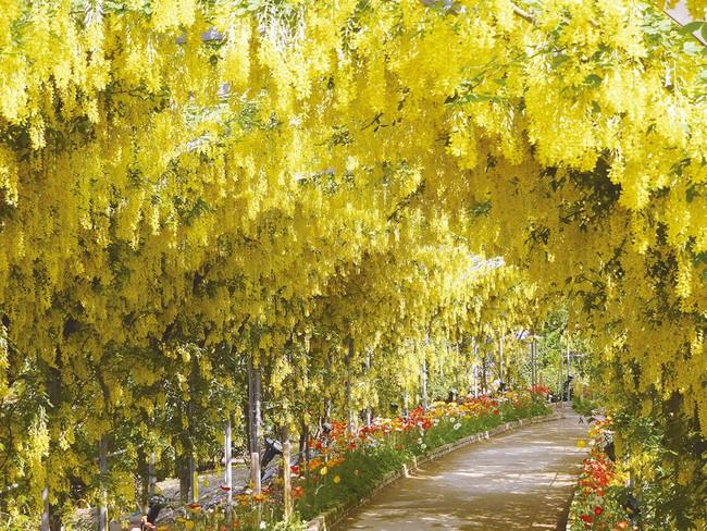 Ghé thăm xứ sở hoa tử đằng mộng mơ và nên thơ ở Nhật Bản - Ảnh 13.