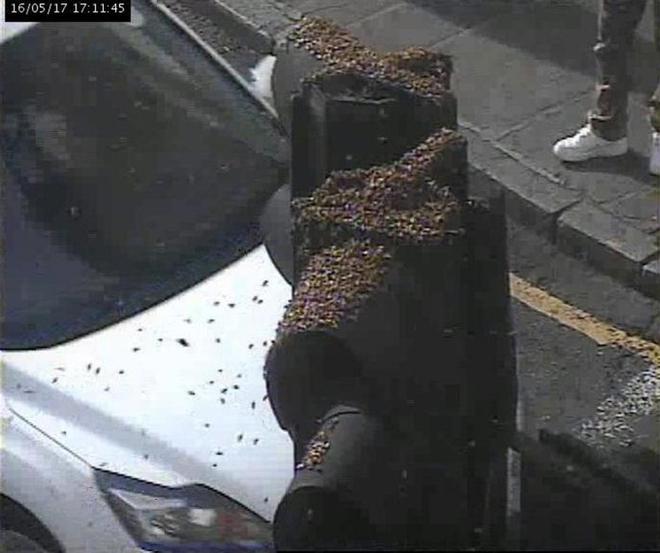 Hàng nghìn con ong lúc nhúc làm tổ trên cột đèn giao thông - Ảnh 2.