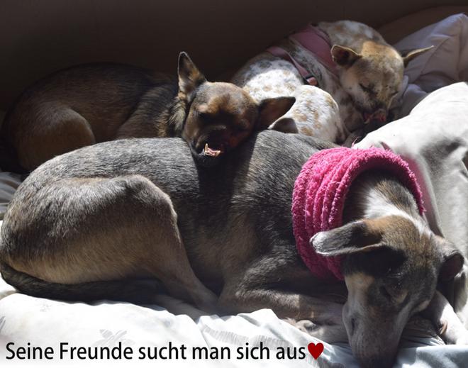 Được tổ chức động vật Đức nhận nuôi, chú chó bị buộc mõm tới hoại tử ngày nào giờ đã là một Việt kiều hạnh phúc - Ảnh 3.
