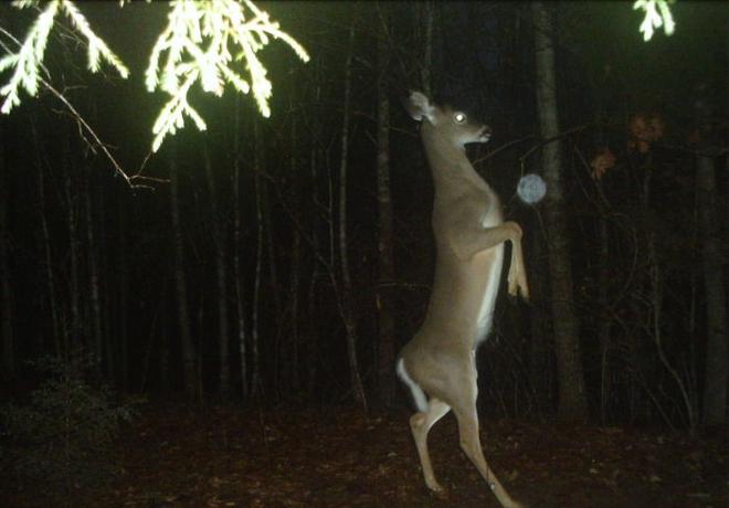 Đặt máy quay lén động vật, thợ săn bất ngờ khi thấy những hành vi kỳ lạ của chúng - Ảnh 9.