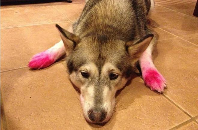 Bản mặt câng câng của 14 chú chó sau khi bị bắt quả tang bôi son trát phấn trộm của chủ - Ảnh 20.