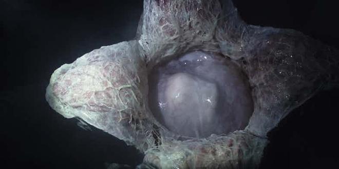 14 quái vật ghê rợn đã xuất hiện trong thương hiệu phim Alien - Ảnh 2.