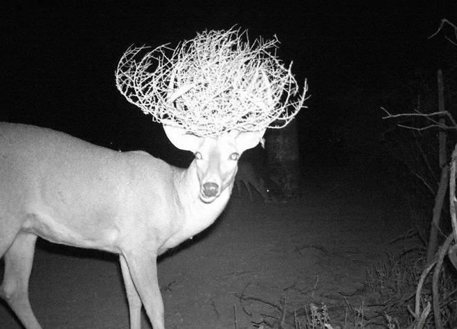 Đặt máy quay lén động vật, thợ săn bất ngờ khi thấy những hành vi kỳ lạ của chúng - Ảnh 15.