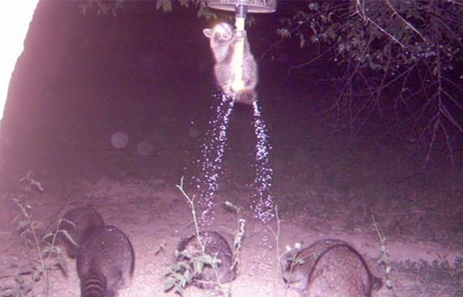 Đặt máy quay lén động vật, thợ săn bất ngờ khi thấy những hành vi kỳ lạ của chúng - Ảnh 19.