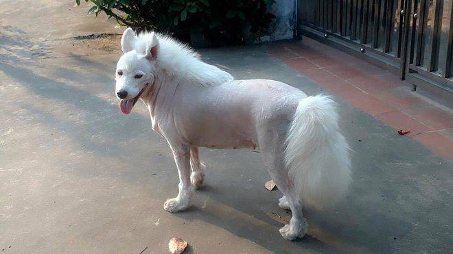 Đố bạn biết, đây là chó hay là ngựa? - Ảnh 1.