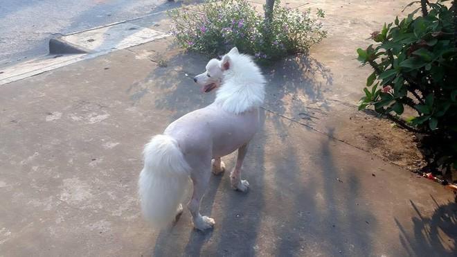 Chú chó với bộ lông chất chơi nhìn không khác gì đang cosplay ngựa! - Ảnh 2.