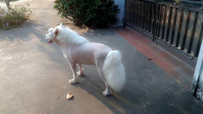 Chú chó với bộ lông chất chơi nhìn không khác gì đang cosplay ngựa! - Ảnh 3.