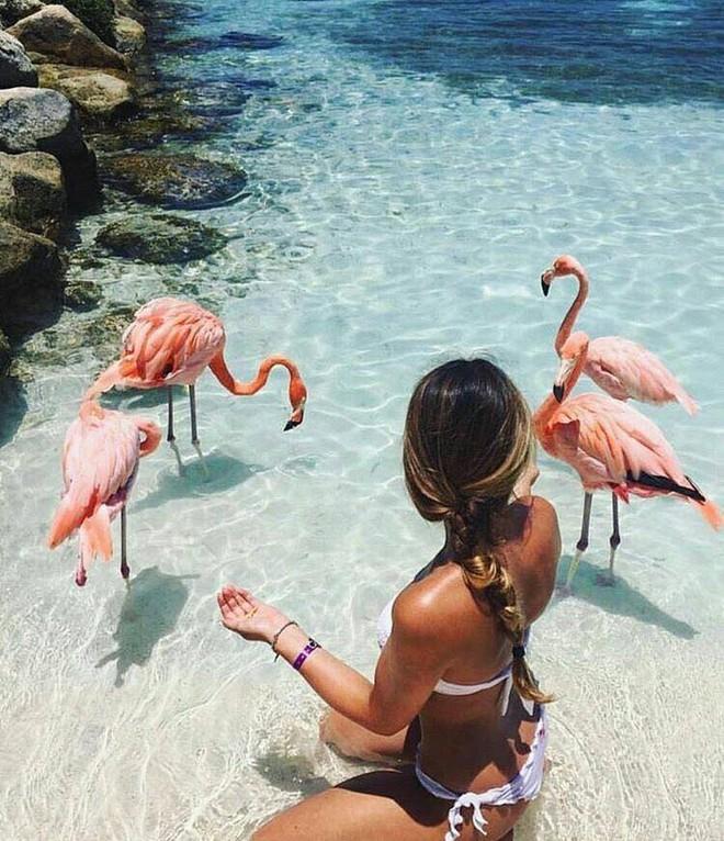 Nóng như thế này chỉ muốn đến ngay thiên đường Aruba tắm biển, thỏa thích chụp ảnh sống ảo cùng hồng hạc mà thôi! - Ảnh 8.