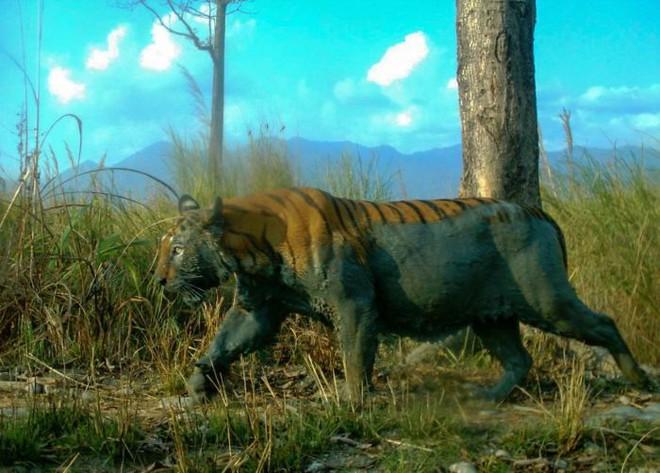 Đặt máy quay lén động vật, thợ săn bất ngờ khi thấy những hành vi kỳ lạ của chúng - Ảnh 23.