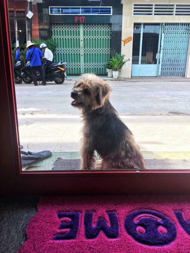 Xúc động nhất Facebook hôm nay: Chú chó ở Đồng Nai quay về tìm chủ cũ sau 3 năm bị bắt đi 3