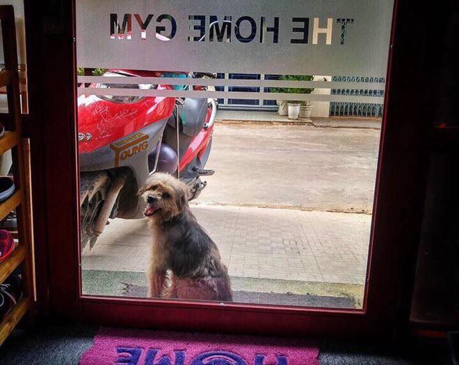 Xúc động nhất Facebook hôm nay: Chú chó ở Đồng Nai quay về tìm chủ cũ sau 3 năm bị bắt đi 2
