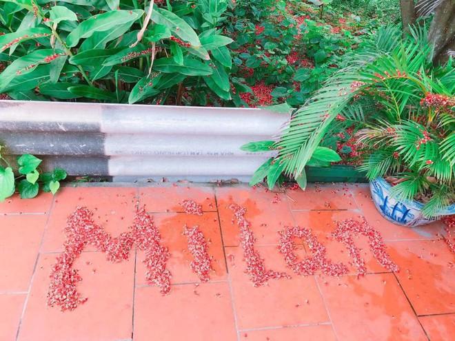 Đến cả quét hoa rơi trên đường bây giờ cũng phải có nghệ thuật như thế này đây! 5