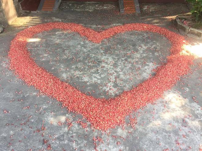 Đến cả quét hoa rơi trên đường bây giờ cũng phải có nghệ thuật như thế này đây! 4