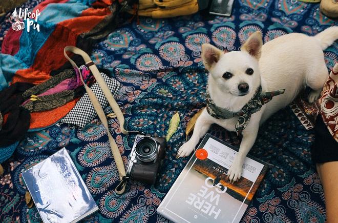 Chuyến đi đầu tiên trong đời của một chú chó - hành trình đáng yêu khiến bạn chỉ muốn dắt cún đi du lịch ngay và luôn! - Ảnh 9.