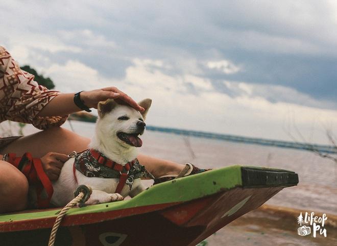 Chuyến đi đầu tiên trong đời của một chú chó - hành trình đáng yêu khiến bạn chỉ muốn dắt cún đi du lịch ngay và luôn! - Ảnh 6.
