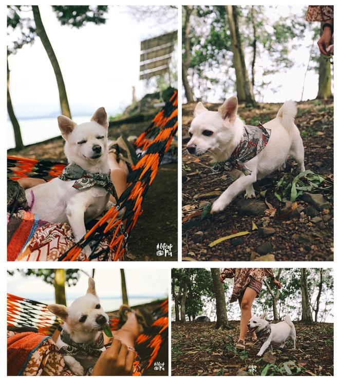 Chuyến đi đầu tiên trong đời của một chú chó - hành trình đáng yêu khiến bạn chỉ muốn dắt cún đi du lịch ngay và luôn! - Ảnh 3.