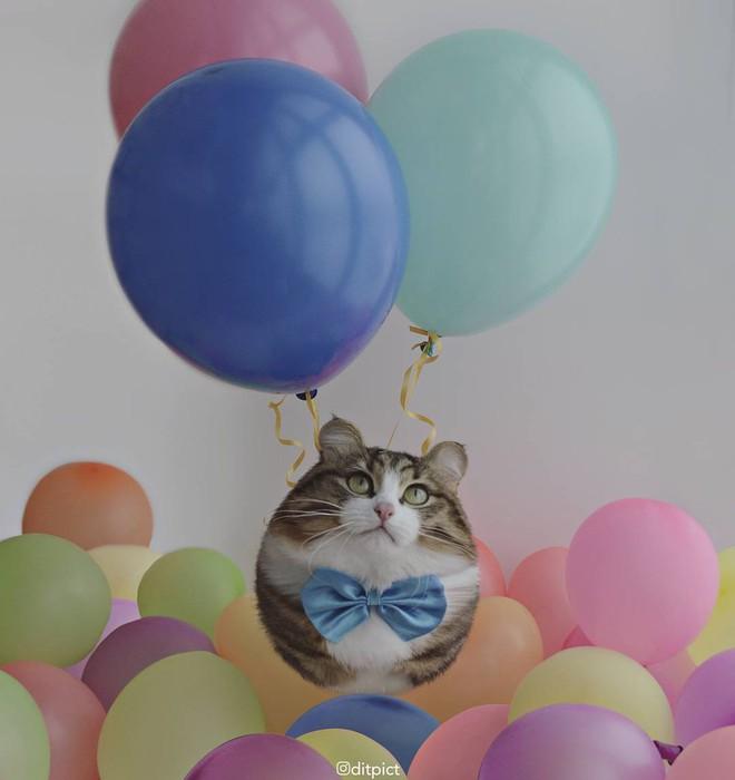 Bộ ảnh Photoshop các loài động vật trở nên tròn vo như bóng bay - Ảnh 11.