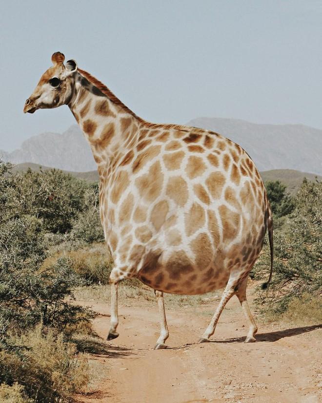 Bộ ảnh Photoshop các loài động vật trở nên tròn vo như bóng bay - Ảnh 19.