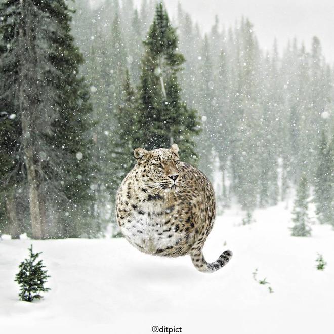 Bộ ảnh Photoshop các loài động vật trở nên tròn vo như bóng bay - Ảnh 23.