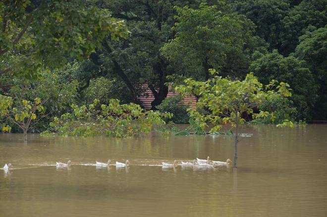 Chùm ảnh: Ninh Bình nhiều nơi nước ngập quá 2m, đường vào khu du lịch Bái Đính bị cô lập - Ảnh 11.