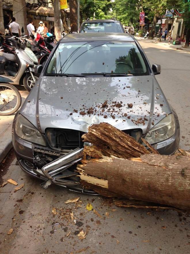 Hà Nội: Xe Mercedes tự nhiên bị cây đổ bẹp đầu trong ngày đẹp trời - ảnh 1