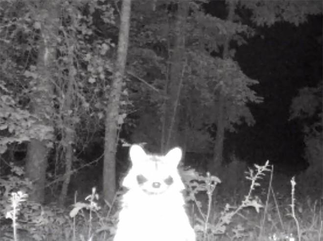 Đặt máy quay lén động vật, thợ săn bất ngờ khi thấy những hành vi kỳ lạ của chúng - Ảnh 33.