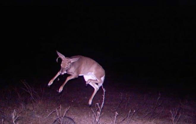Đặt máy quay lén động vật, thợ săn bất ngờ khi thấy những hành vi kỳ lạ của chúng - Ảnh 36.