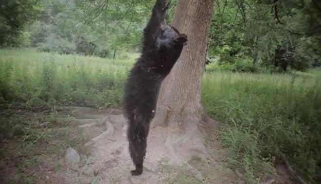 Đặt máy quay lén động vật, thợ săn bất ngờ khi thấy những hành vi kỳ lạ của chúng - Ảnh 38.