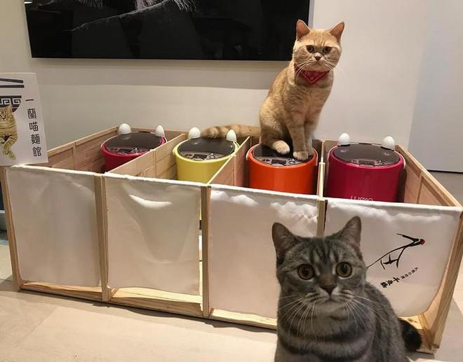 Mèo béo ăn tranh phần của con, chủ nhân đã nghĩ ra cách vô cùng vi diệu - Ảnh 3.