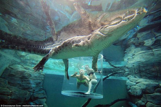 Nhiều du khách chi tiền triệu để trải nghiệm cảm giác mạnh, đối mặt với cá sấu ăn thịt người dài 5m - Ảnh 7.