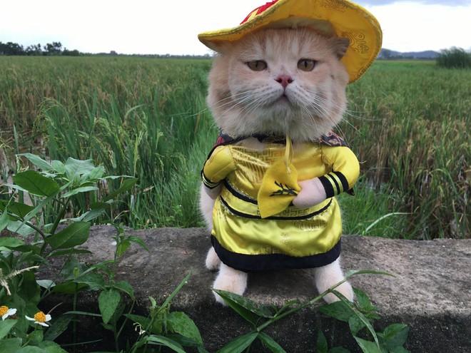 Gặp chú mèo Hoàng Thượng đi chợ vi hành, các con sen đều đứng ngồi không yên - Ảnh 5.