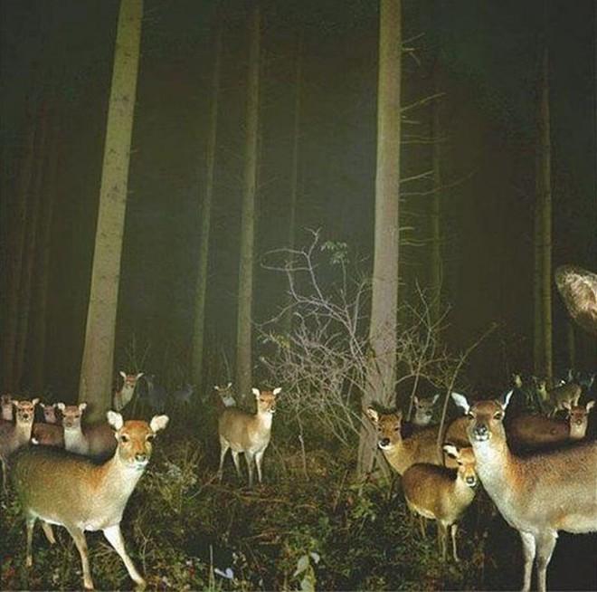 Đặt máy quay lén động vật, thợ săn bất ngờ khi thấy những hành vi kỳ lạ của chúng - Ảnh 7.