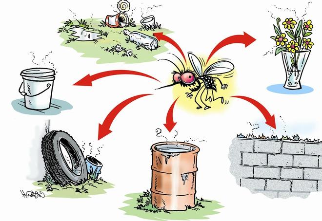 3 bước cần thực hiện ngay để nhà không còn muỗi gây bệnh sốt xuất huyết - Ảnh 1.